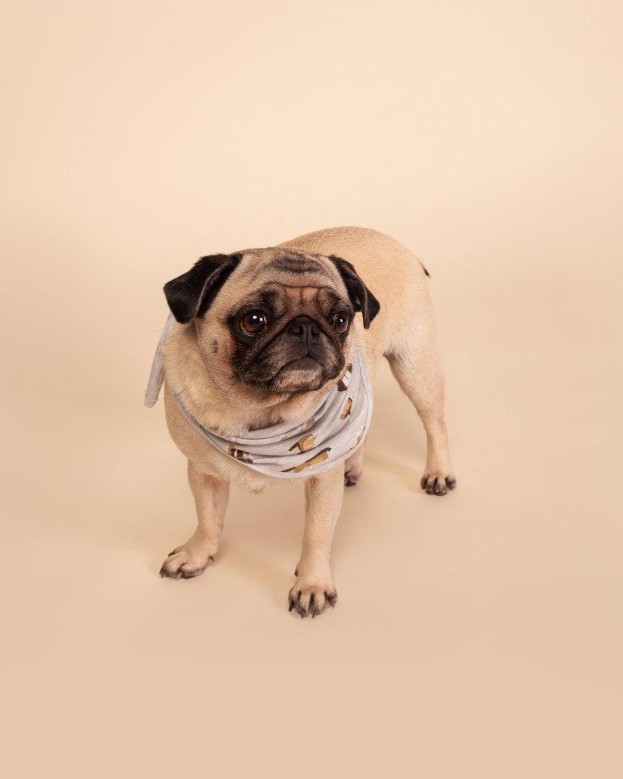 Bandana Pet 1/2 Malha Dog Happy Moments Verão