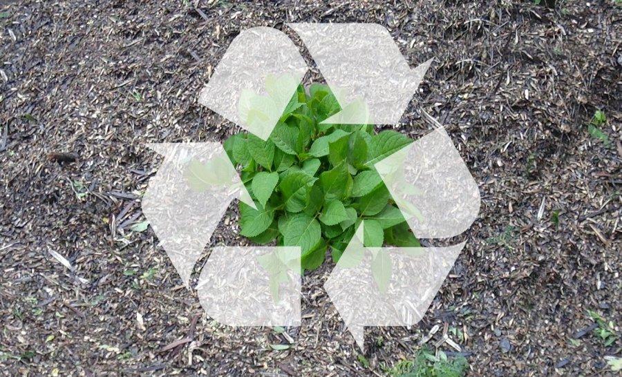 As melhores práticas para a gestão de resíduos orgânicos verdes para fugir das multas ambientais e criar economia