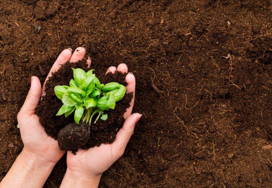Guia de Compostagem orgânica para residências e áreas verdes